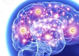 Neurocyclin - เพื่อความจำที่ดีขึ้น - พัน ทิป - ดี ไหม - ผลกระทบ
